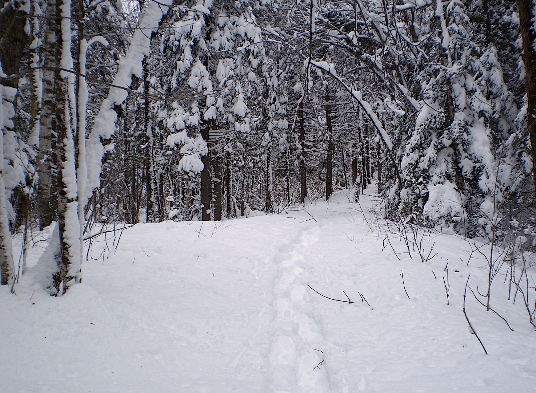 Snow-covered path surrounded by deciduous trees topped with snow